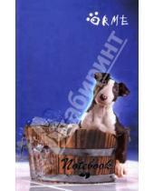 Картинка к книге Канцелярские товары - Notebook А5 112л. Or123 Orme