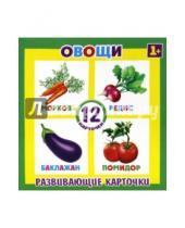 Картинка к книге Феникс+ - Развивающие карточки Овощи (12 штук) (37271-50)