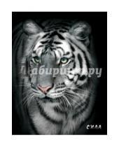 "Картинка к книге Блокнот настоящего хищника - Блокнот настоящего хищника ""Белый тигр"""