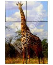Картинка к книге Десятое королевство - Кубики: Ну и Африка (05013)